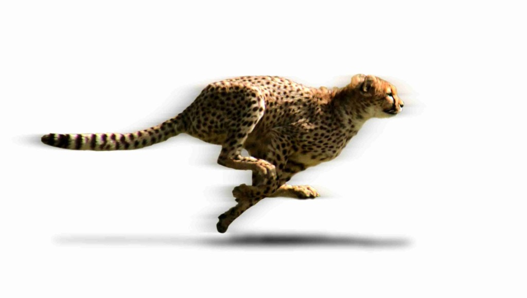 accelerate.cheetah